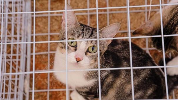 Mais de 300 gatos participam de evento na Avenida Paulista neste fim de semana